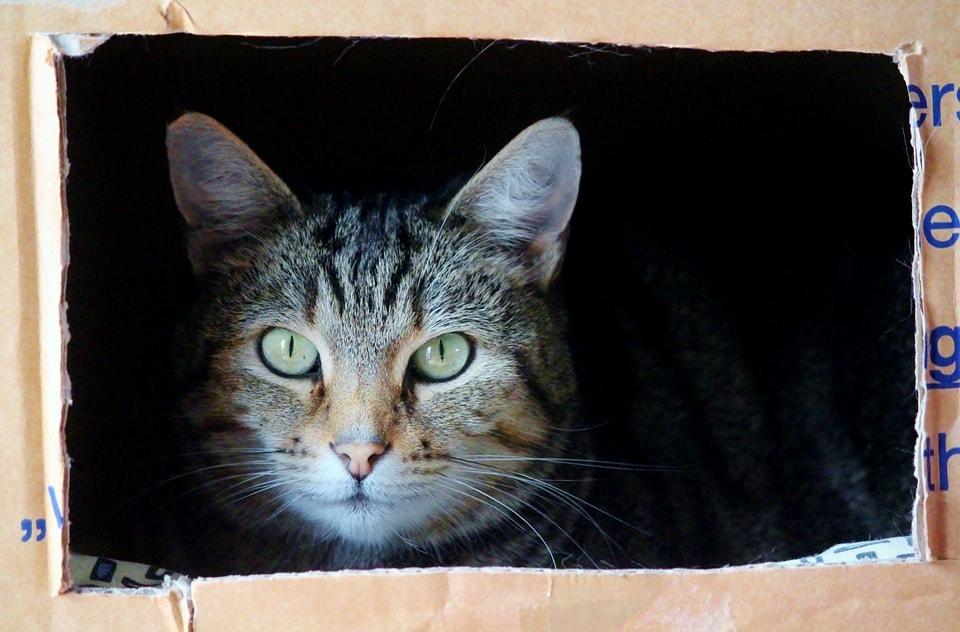 cat-829121_960_720