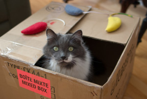 No, you don't need to pack your cat.  Image via Douglas O'Brien/Getty Images.